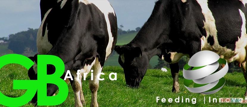 Cattle Feeding